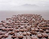 PHOTO SPENCER TUNICK
