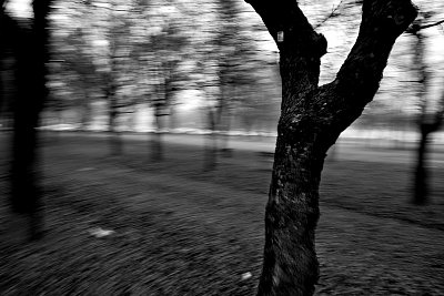 Running heebie-jeebies away - Test 3 - Qanta sofferenza vista da questi alberi...